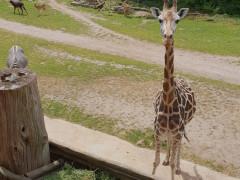 Zoo Leipzig (irgendwie guckt das Vieh lustig...)